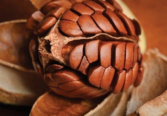 mahogany flower